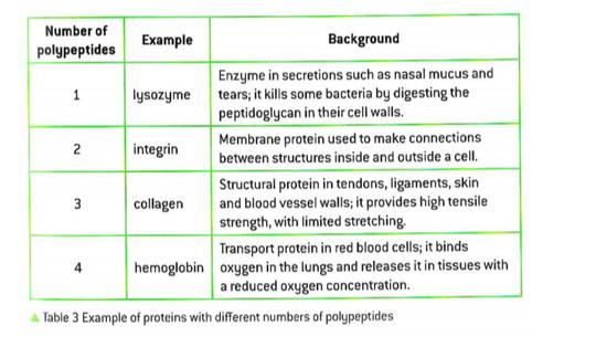 24 Proteins Biology Sl 11 12
